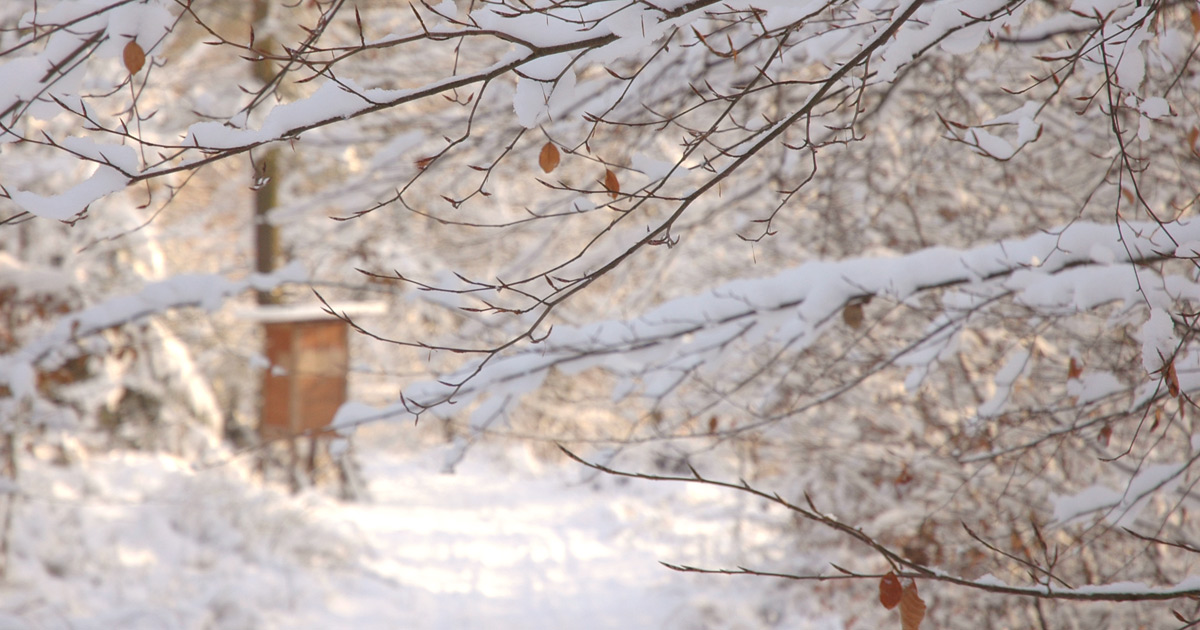 Foto: Schneelandschaft